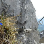 Flowers can be found in cracks as you climb up the via ferrata
